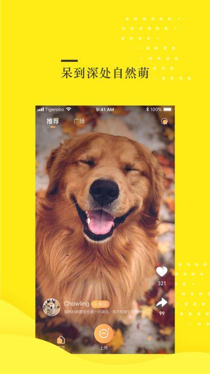 蛋挞视频app图2