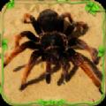 蜘蛛模拟生存安卓版 v1.0