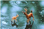 鹿的哪个身体部位有再生功能每年都会完整地重生? 蚂蚁庄园10月26日今日答案[多图]