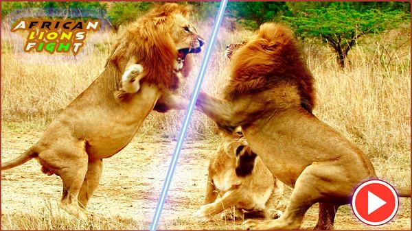 非洲狮模拟器游戏图3