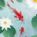 鱼戏荷塘游戏安卓版 v1.0.0