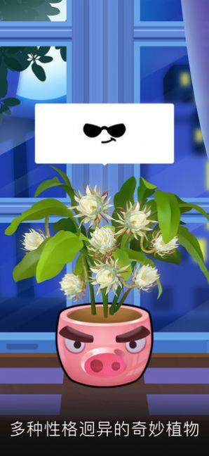 我的花园游戏官方红包版图片1