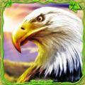 猎鹰模拟器3D