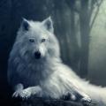 森林荒原狼模拟器