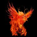 火鸟汉化组app解压直装版 v1.0