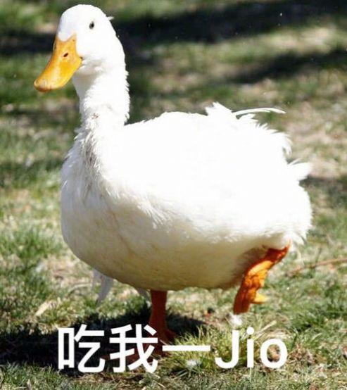 最近流行的鸭子表情包图片图片1