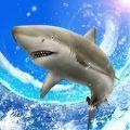 野生鲨鱼垂钓