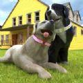 孕犬宠物护理