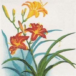 常见药用植物手册 wp8